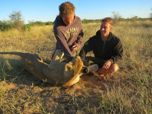 lion-whisperers-modisa-botswana-by-nicolai-frederk-bonnen-rossen-7_s