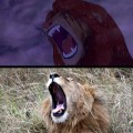 real-life-lion-king-brandon-heuser-18_s