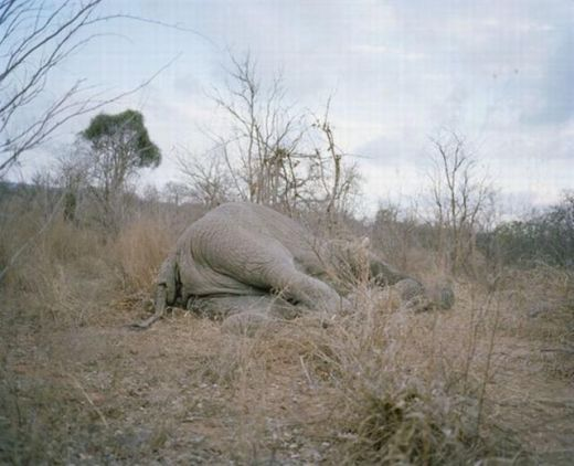 zimbabwe_elephant_01_s