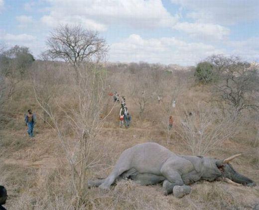 zimbabwe_elephant_02_s