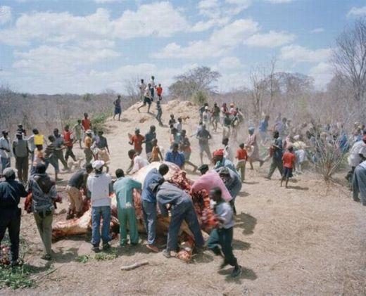 zimbabwe_elephant_04_s