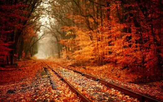 【画像集】世界の紅葉画像が美しすぎる【幻想的】
