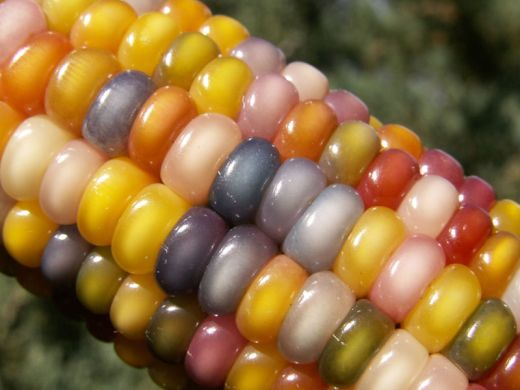 glass-gem-corn-rainbow-colored-10_s