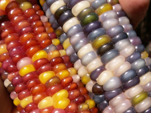 glass-gem-corn-rainbow-colored-11_s