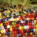 glass-gem-corn-rainbow-colored-1_s