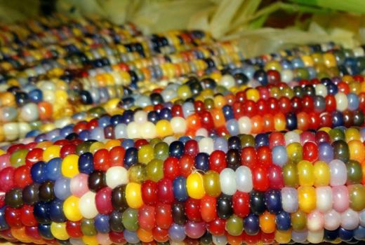 glass-gem-corn-rainbow-colored-1_s
