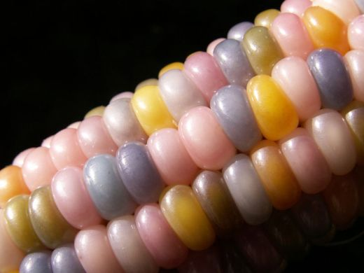 glass-gem-corn-rainbow-colored-2_s