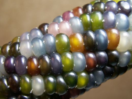 glass-gem-corn-rainbow-colored-5_s