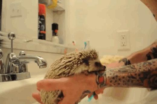 catvshedgehog01