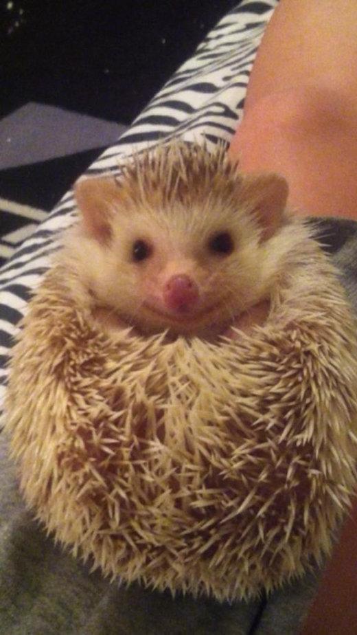 catvshedgehog09[1]