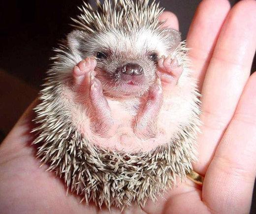 catvshedgehog13[1]