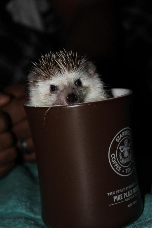 catvshedgehog16[1]