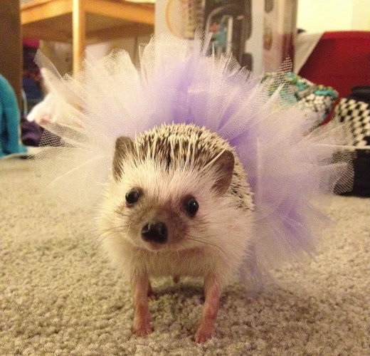 catvshedgehog32[1]