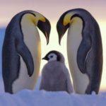 野生動物の美しすぎる写真画像集:ナショナル・ジオグラフィックの写真はすごい!