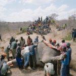 死んでいた象の肉を跡形も無く村人が分け合う画像集【閲覧注意】
