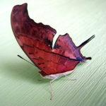 【画像集】世界の魅力的な蝶の世界